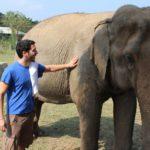 Face à l'extinction de nombreuses espèces animales, la zoologie pourrait également disparaître