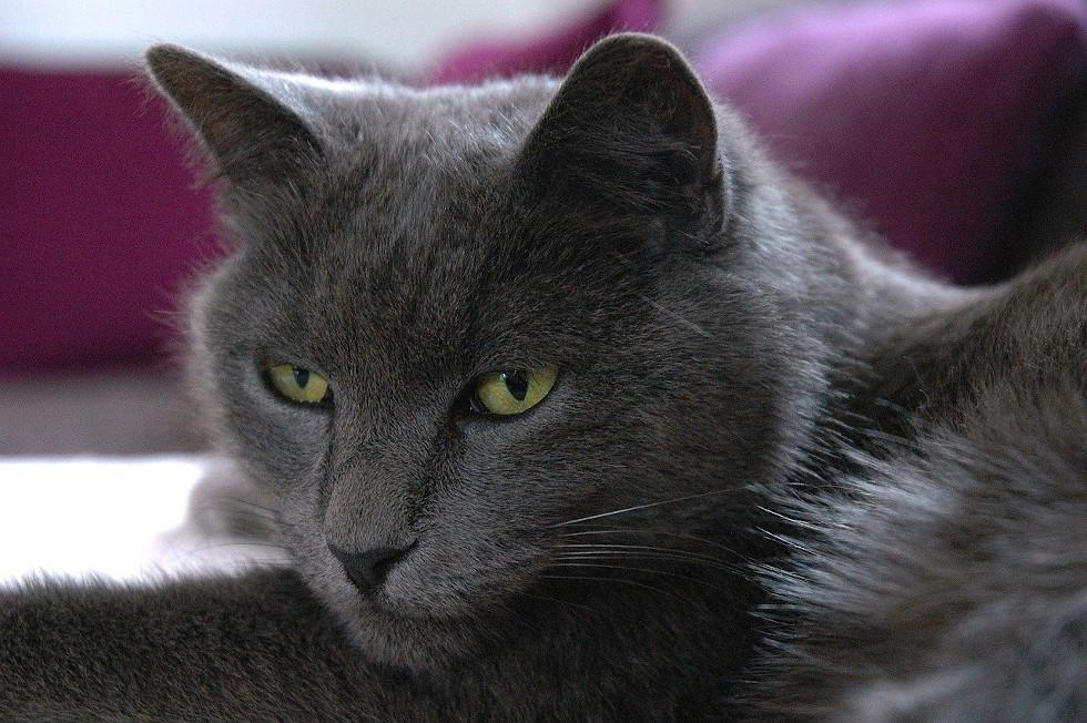 Un chat observant d'un mauvais oeil son maître empiéter sur son territoire