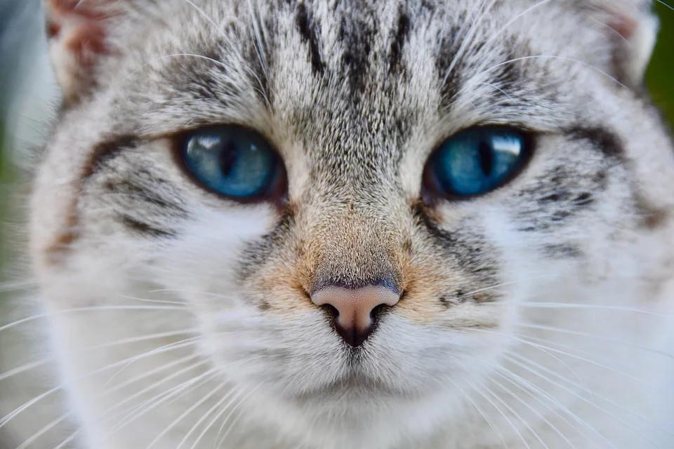 Vacciné, le chat de Schrödinger serait mort et guéri du coronavirus en même temps